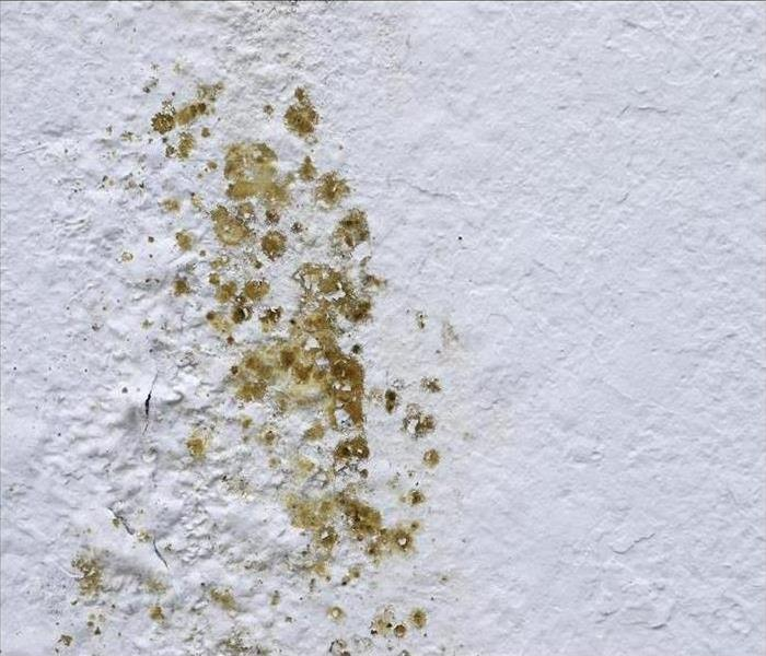 Do you think it might be black mold?